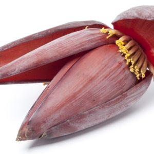 Banana-flower_1200